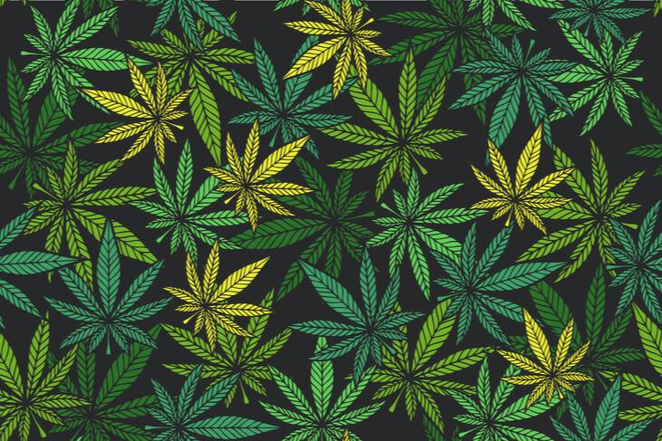 cannabis strains leaves