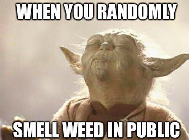 weed meme about smelling cannabis in public