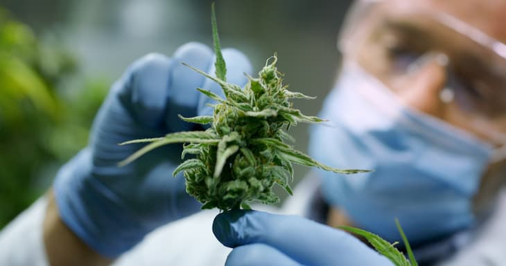 Medicinal cannabis is rapidly gaining traction in Australia