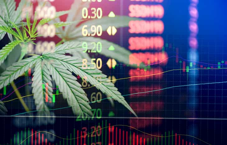 cannabis firms stocks