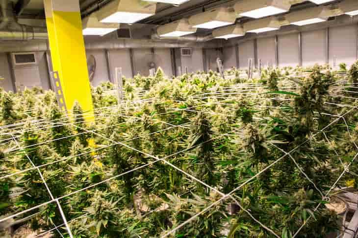 Recreational cannabis sales in Michigan