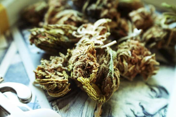 cannabis crimes