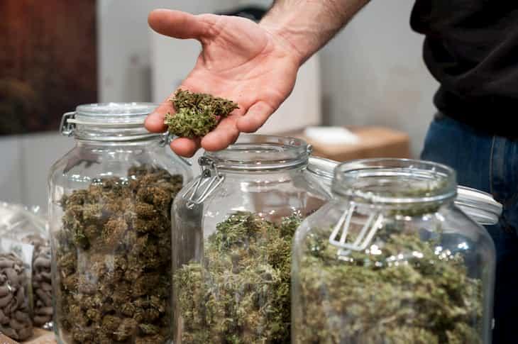best cannabis strains for making RSO
