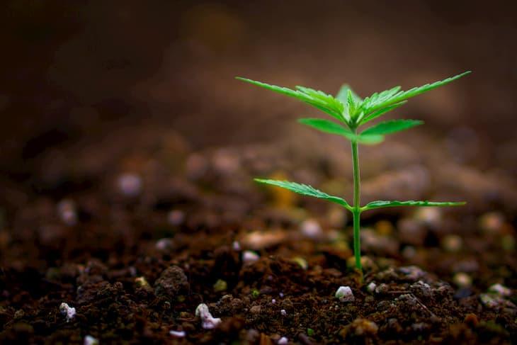 illegal cannabis uk