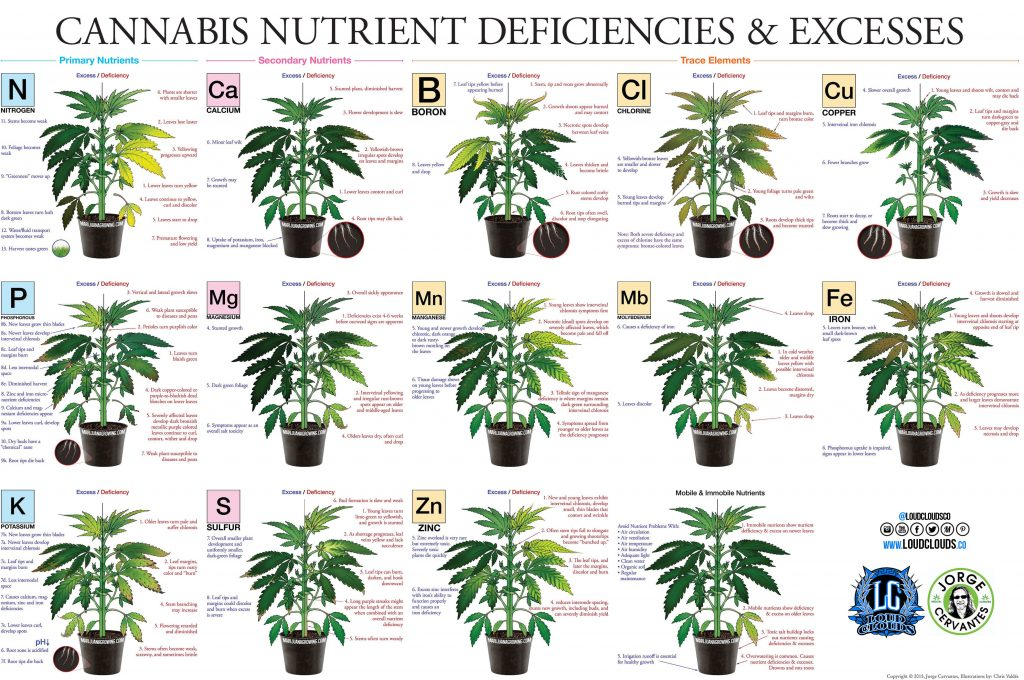 cannabis deficiency chart